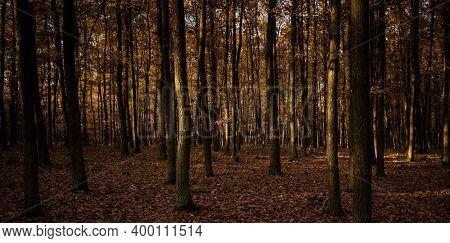 Splendid autumn captured in a landscape image