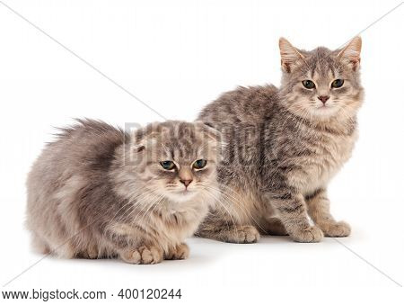 Two Small Gray Kitten On A White Background.