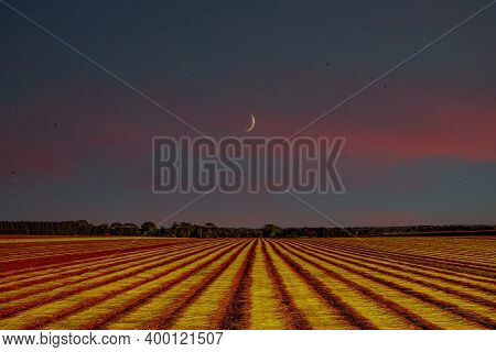 Flax Fields In Normandy, France