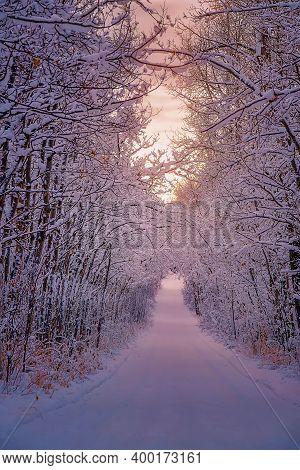 Sunrise Glow Over A Treelined Wintry Road