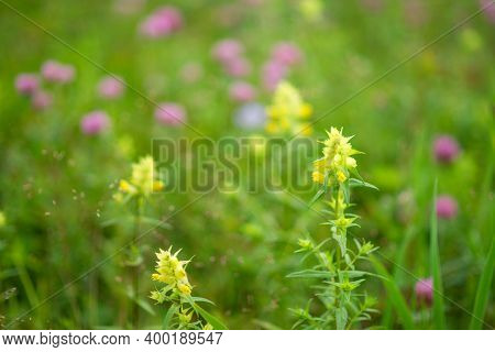 A Beautiful Meadow Field With Fresh Grass, With Yellow And Pink Flowers In Nature Against A Backgrou
