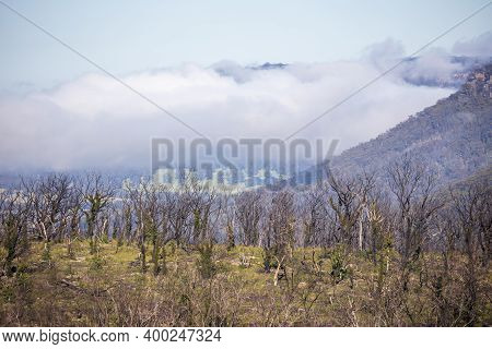 Low Clouds In A Valley Of Forest Regeneration After Bushfires In The Blue Mountains In Regional New
