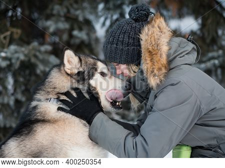 Funny Alaskan Malamute Face To Face With Woman In Winter Forest. Close Up.