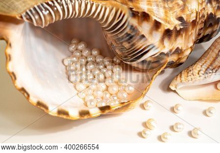 Pearl Beads Lie In A Seashell Shell, Close Up Photo