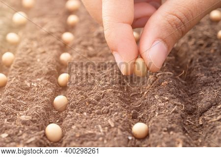 Hand Growing Seeds Of Vegetable In The Soil In Rows. Gardening, Planting At Home. Sowing Seeds.