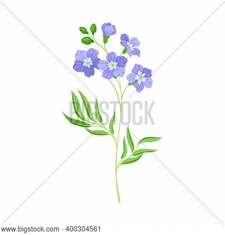 Common Flax Or Linseed As Wildflower Specie Or Herbaceous Flowering Plant Vector Illustration