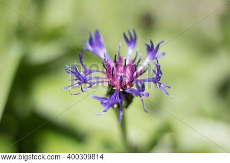 A Violet Devil's Claw