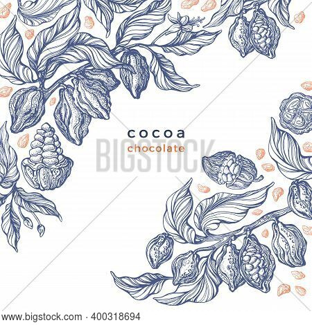 Cacao Texture Plant. Vector Graphic Bean, Branch. Art Hand Drawn Botanical Illustration On White Bac