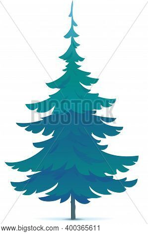 One Tiny Spruce Tree Illustration, White Spruce Evergreen Coniferous Tree In Side View Isolated