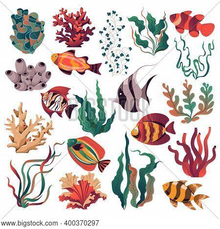 Marine And Sealife, Seaweed And Fish Aquarium