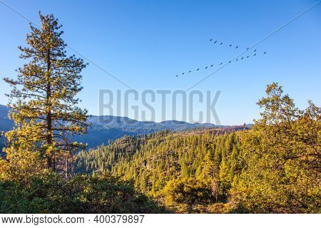 Granite rocks overgrown with dense forest. Flock of migratory cranes flies over the mountains. Western Cordillera. Yosemite Park is located on the slopes of the Sierra Nevada. USA