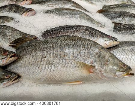 Giant Perch On Ice In  Market ,seafood Background ,seafood Market. Close Up Of Fresh Fishes Giant Pe