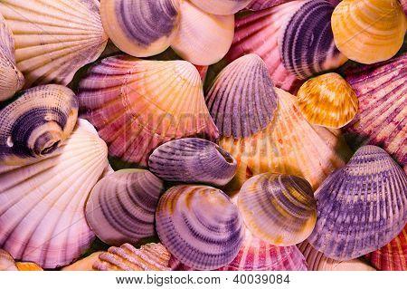 Shells Mosaic