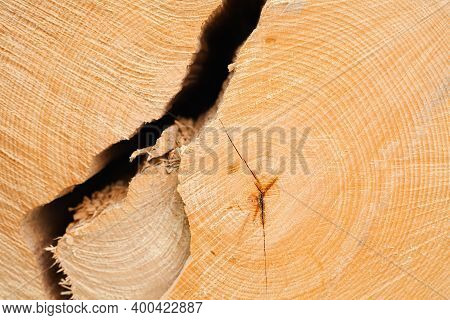 Wooden Tree Cut Surface. Felled Trees In Forest. Background Of Felled Tree. Natural Wood Texture. Cl