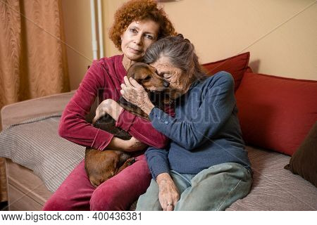 The Theme Is Animal Therapy, Caring For Elderly With Dementia And Alzheimers Disease. Adult Women Sp