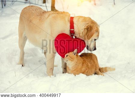Cute Scene. Labrador Dog With A Heart-shaped Pillow Hanging On The Collar. A Red Cat Rubs Against La