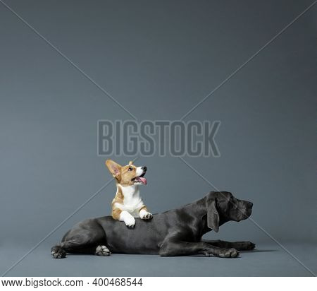 Dog. Puppy Family Pets And Popular Dog Breeds. Pet Care And Animals Concept.
