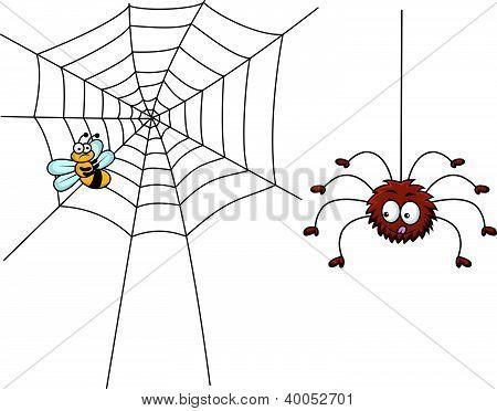 Spider lunch