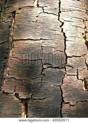 Pattern of dark wooden bark