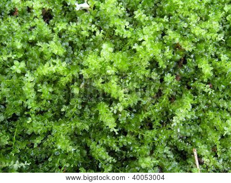 green wet moss in the forest