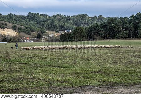 Chief Shepherd With Sheepdog And Flock Of Sheep, Little Fatra, Slovak Republic.