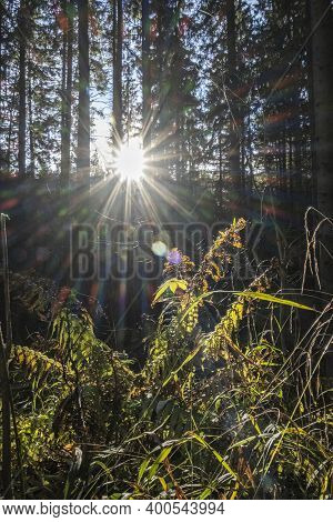 Sunrays Scene In Coniferous Forest, Little Fatra Mountains, Slovak Republic. Hiking Theme. Seasonal