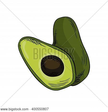 Watercolor Eco Frut. Line Painted Avocado. Colored Line Sketch Of Avocado On A White Background. Han