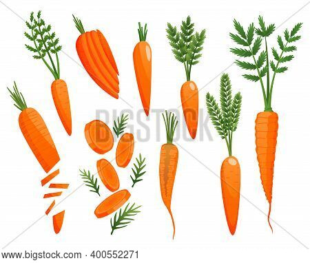 Carrot. Orange Roots, Green Carrot Tops. Vegetable Vector Sketch. Fresh Cartoon Vegetable Isolated O