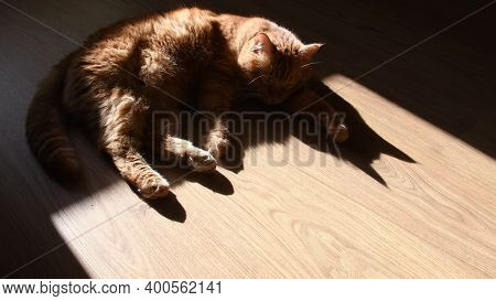 Red Tabby Cat Laying On Wood Floor In Bright Sunlight With Black Silhouette Shadows. Focus On Shadow