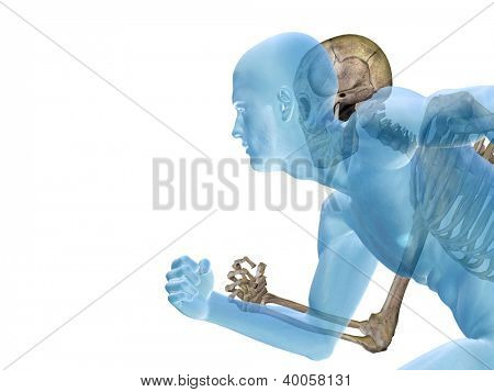 Anatomy concept or conceptual human or man body chest,head isolated on background as a metaphor for medical,science,health,male,biology,medicine,bone,anatomical,muscular,system ,face,cranium and spine