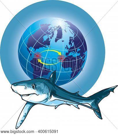 Vector Illustration Shows A Blue Shark Migration.