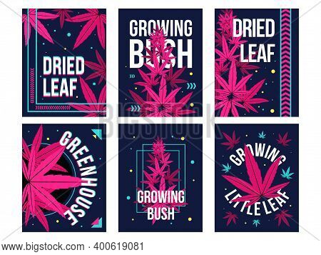 Dark Greeting Card Designs With Marihuana Pink Leaves. Colorful Ganja Postcards With Text And Bright