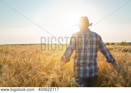 The Farmer Checks The Wheat Harvest. The Concept Of A Rich Harvest In An Agricultural Field