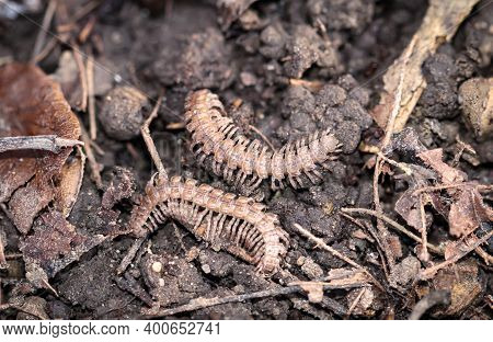A Close Up Of Two Arthropods On The Forest Floor.