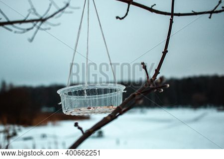 Handmade Bird Feeder With A Bit Of Nuts Made In A Purpose To Recycle Plastic Hang On The Tree In The