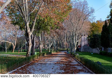 Autumn Platanus Alley In Sunny Day In Istanbul, Turkey