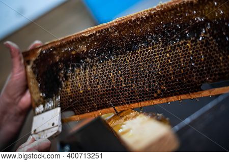 Close-up Of Beekeeper Extracting Honey From Honeycomb With A Scraper In Apiary