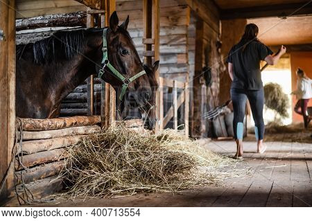 In The Wooden Stable On The Ranch, Lunch Begins, The Owner Distributes Hay To His Horses.