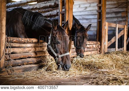 On An Autumn Day In The Stable, Horses Eat Food Brought To Them By The Owner Of The Stable