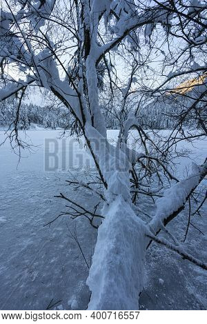 A Snowy Trunk Protrudes Over The Frozen Lake Of Fusine, Tarvisio, Italy