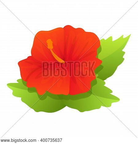 Blossom Hibiscus Icon. Cartoon Of Blossom Hibiscus Vector Icon For Web Design Isolated On White Back