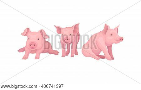 Pink Pig As Even-toed Ungulate Domestic Animal In Different Poses Vector Set