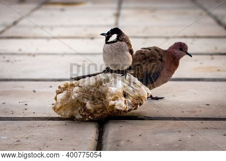 Image Of Male Sparrow On White Floor Background, Sparrow Bird