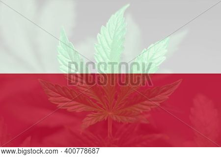 Medical Cannabis In The Poland. Weed Decriminalization In Poland. Cannabis Legalization In The Polan