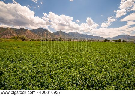 A Scenic Landscape Of Green Alfalfa Fields With A Distant Mountain Range And Beneath A Cloudy Sky.