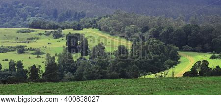 Rolling Grassland And Forest At 9th Mile, Ooty Hill Station, Tamilnadu In India