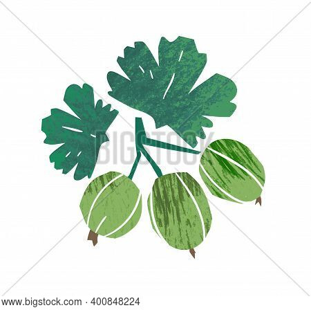 Hand Drawn Fresh Green Gooseberry With Leaves Vector Flat Textured Illustration. Ripe Natural Season