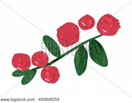 Hand Drawn Branch Of Cranberry Or Lingonberry Vector Flat Illustration. Red Ripe Healthy Berries, Se