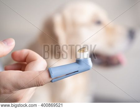 Male Hand Holding A Dog's Toothbrush With Tooth Gel. Golden Retriever In The Background