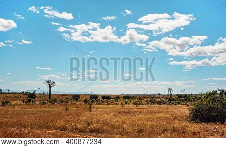 Flat Land With Low Grass And Bushes, Some Baobab Trees Growing In Distance, Typical Landscape Of Man